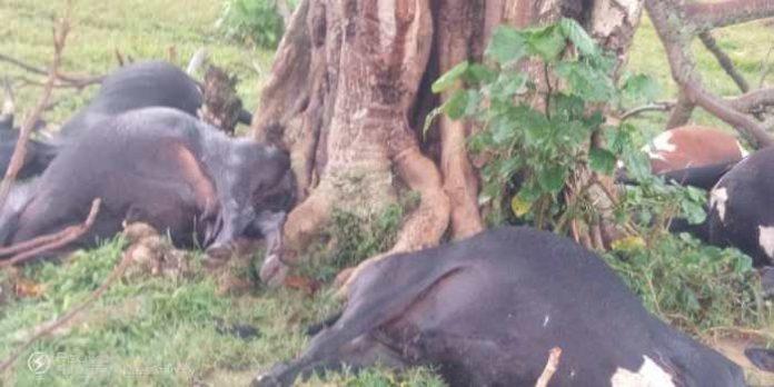 Lightening strikes 9 cows dead in Kanungu district